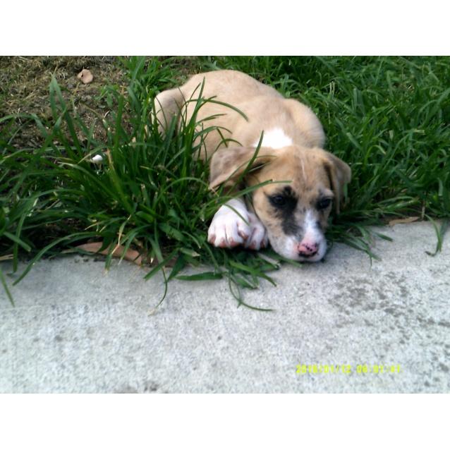 Photo of Layni