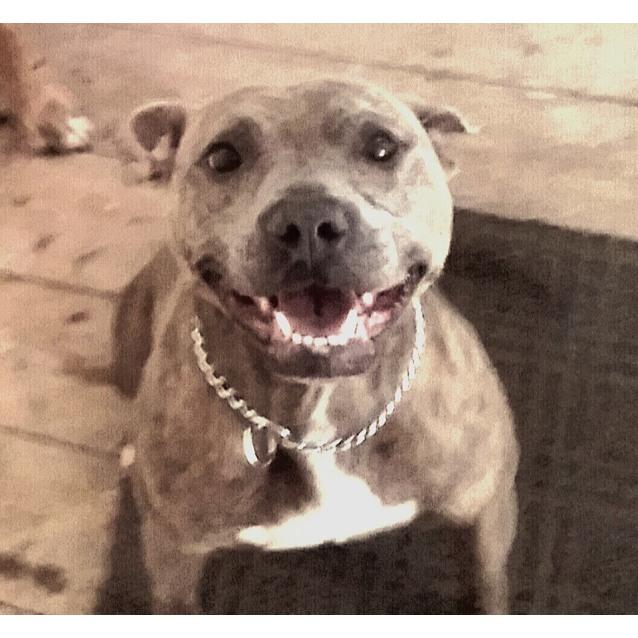 Photo of Stella Yes I'm Gorgeous & Fabulous!