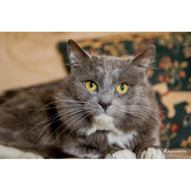 Photo of Romy (Pascoe Vale) **$50 Adoption**