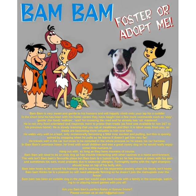 Photo of Bam Bam