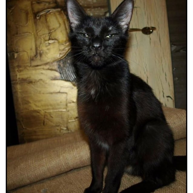 Photo of Midnight Adoption Fee $120
