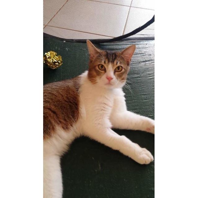 Photo of Charlie (Melton)