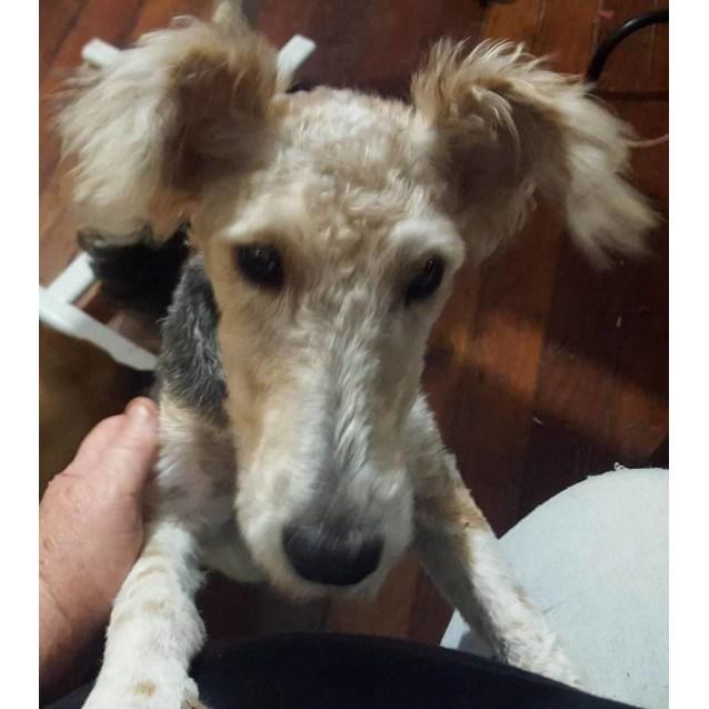 Photo of Annie (Adoption Pending)