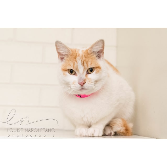 Photo of Butterscotch (3959)