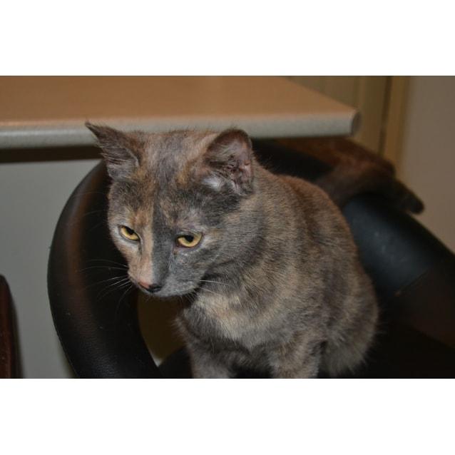 Photo of Maisy
