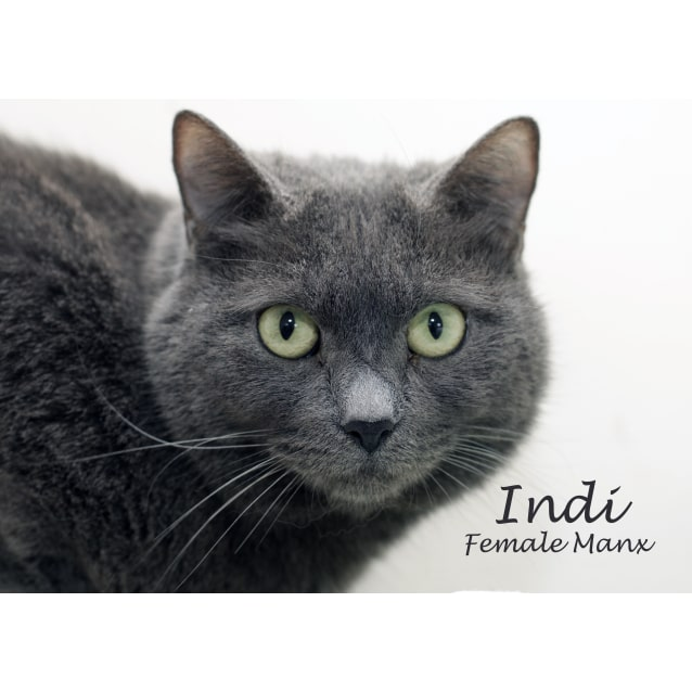 Photo of Indi