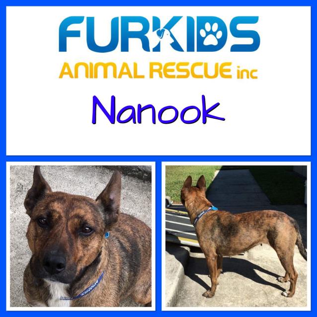 Photo of Nanook