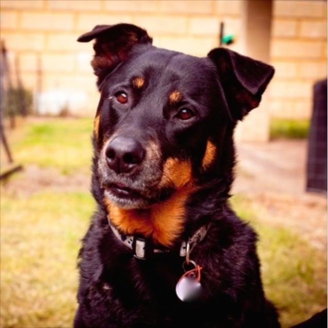 Photo of Barney
