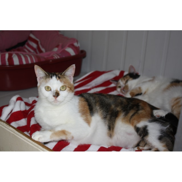 Photo of Pound Cats | Pixie & Dixie **** Love Children!