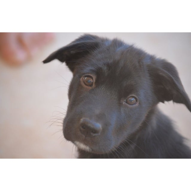 Photo of Blacknee   Cd0098 *Adoption Pending*