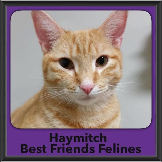 Photo of Haymitch