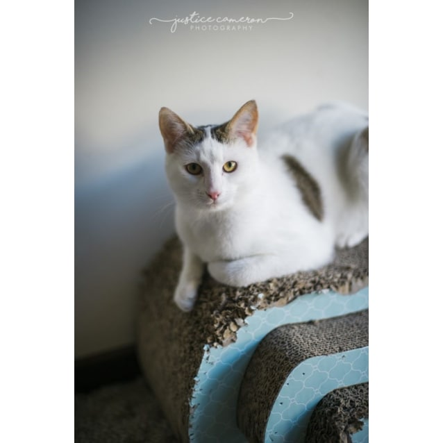 Photo of Mash & Petunia