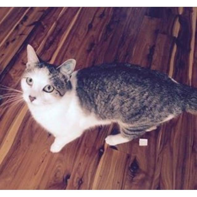 Photo of Tyger