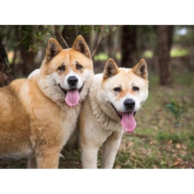Photo of Kira & Kobe