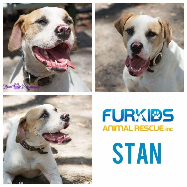 Photo of Stan