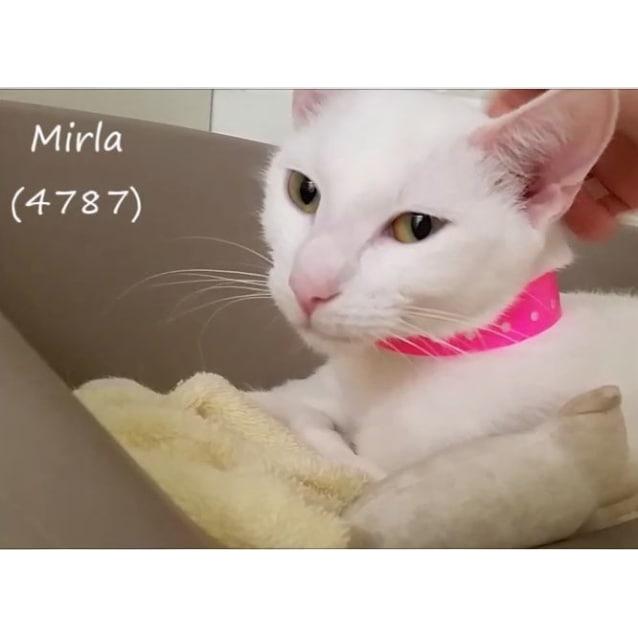 Photo of Mirla (4787)
