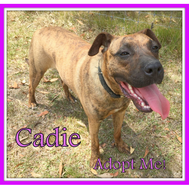 Photo of Cadie ~ Mastiff X