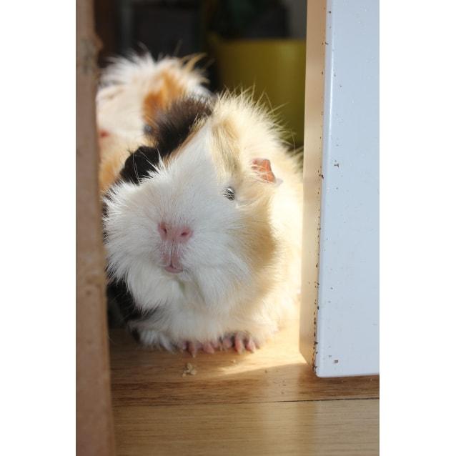 Photo of Ginger & Iggie