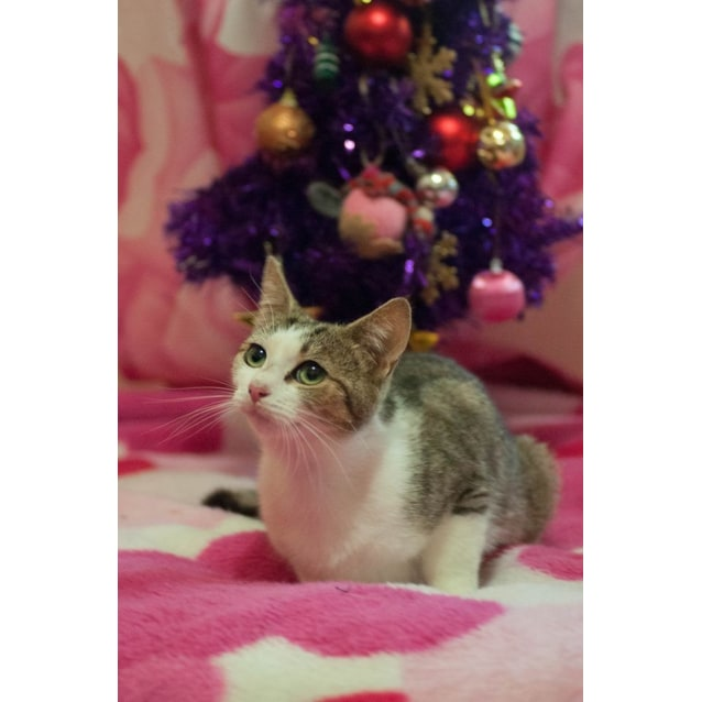 Photo of Sophie🎄❤ $50 Adoption 🎄❤(Located In Pascoe Vale)