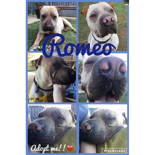 Photo of Romeo