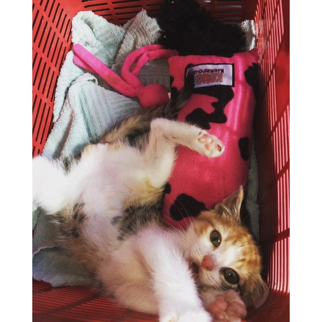 "Photo of ""Peanut"" **Reduced Adoption Fee**"