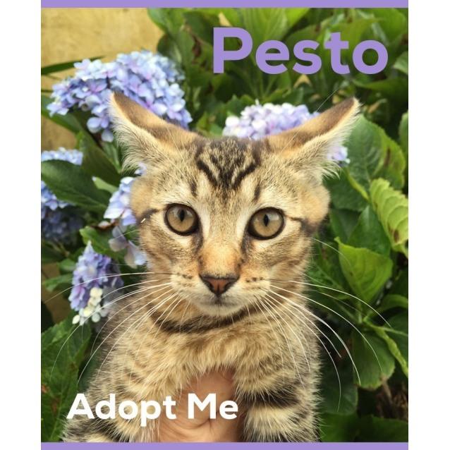 Photo of Pesto ~ On Trial 4/2/17