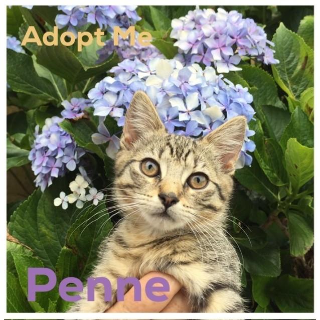 Photo of Penne ~ Friendly Kitten (On Trial 18/1/17)