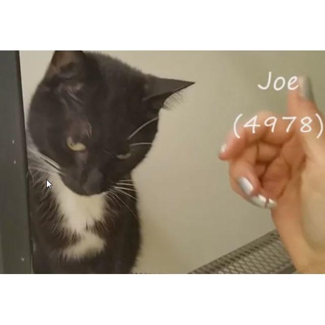 Photo of Joe (4978) & Ricky (4979)