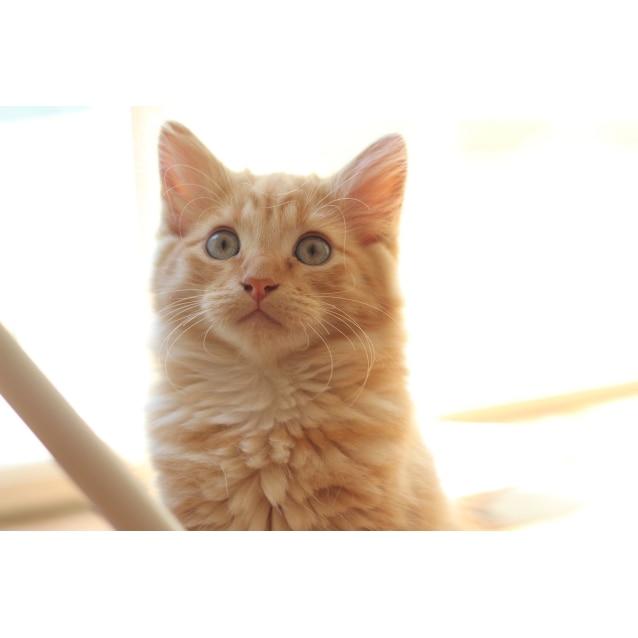 Photo of Rocco