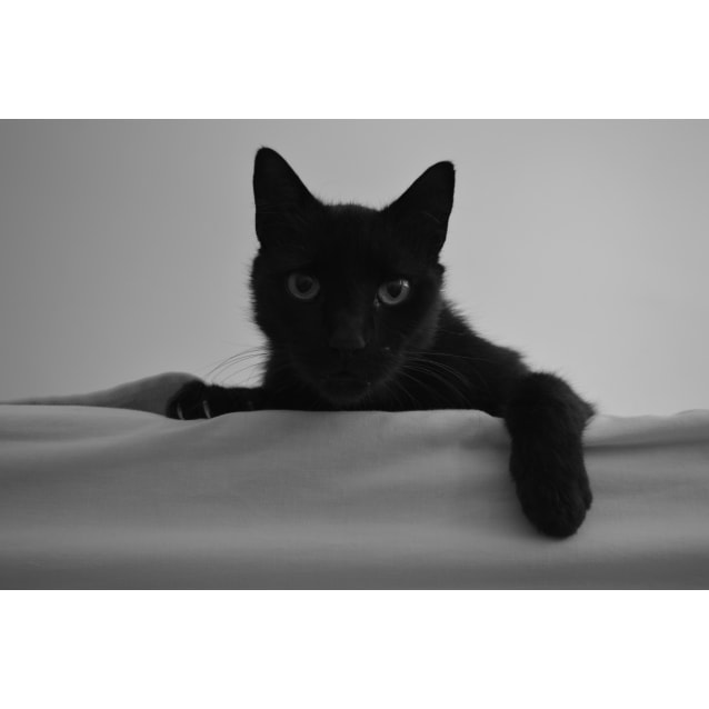 Photo of Midnight
