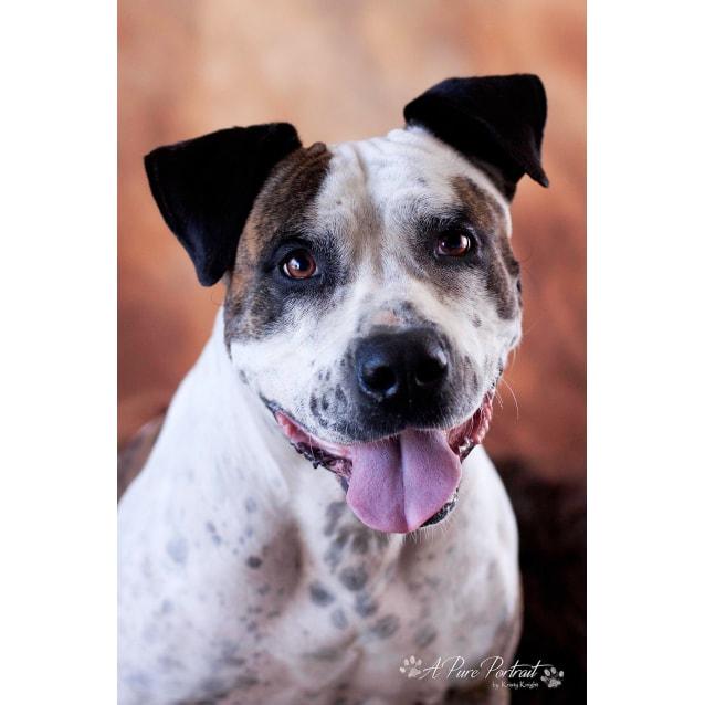 Photo of Opez . Big Dog, Little Dog, Child Friendly