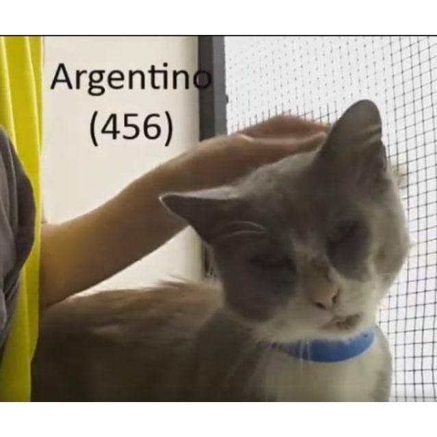 Photo of Argentino (0456)