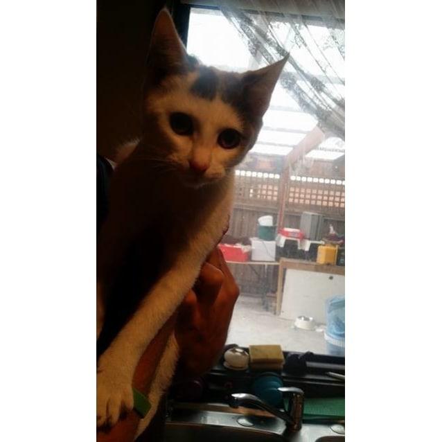 Photo of Tina (Located In Craigieburn)