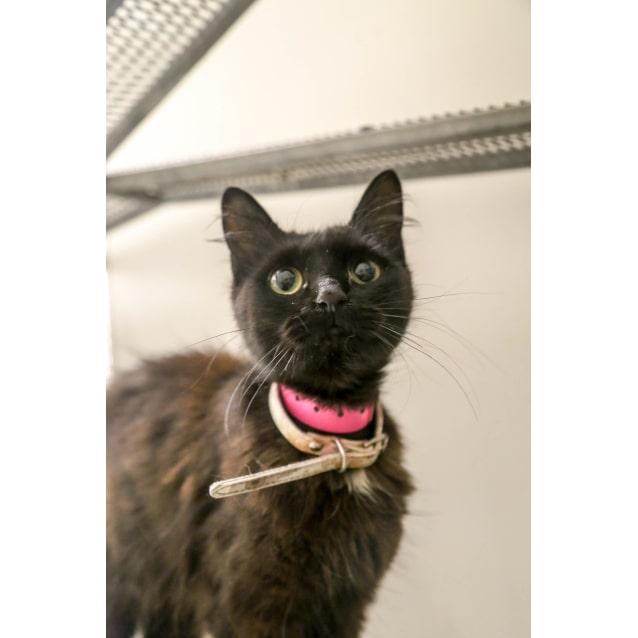 Photo of Olivia (0085)