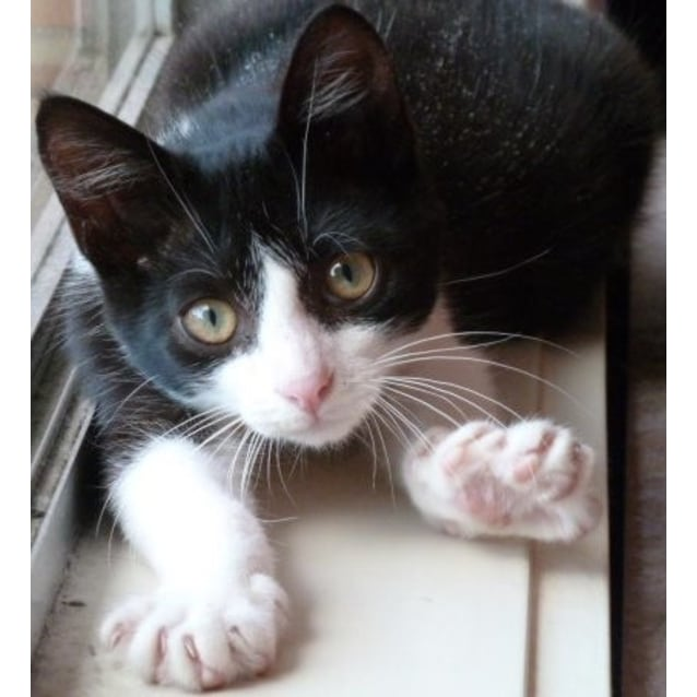 Photo of Leonardo (Located In Preston) *$150 Adoption*