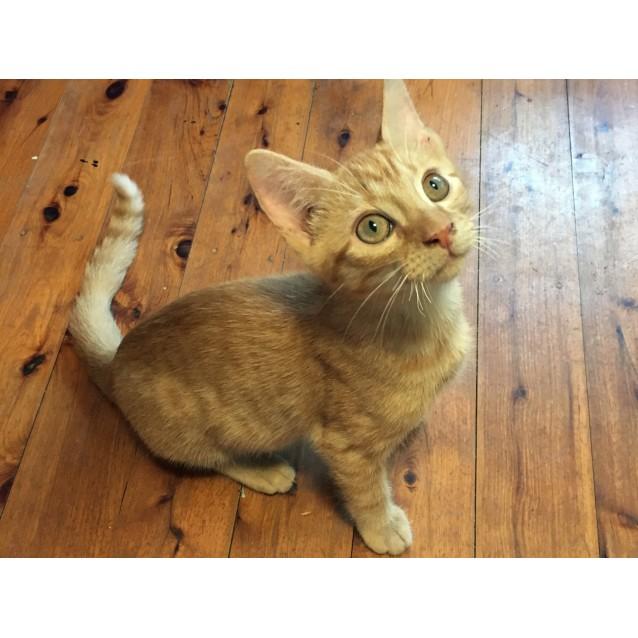 Photo of Weasley