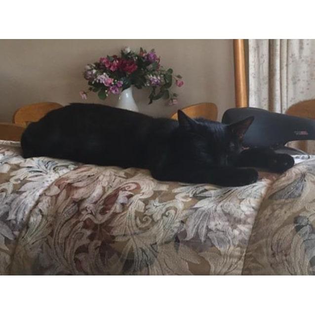 Photo of Rufus (Located In Diamond Creek)