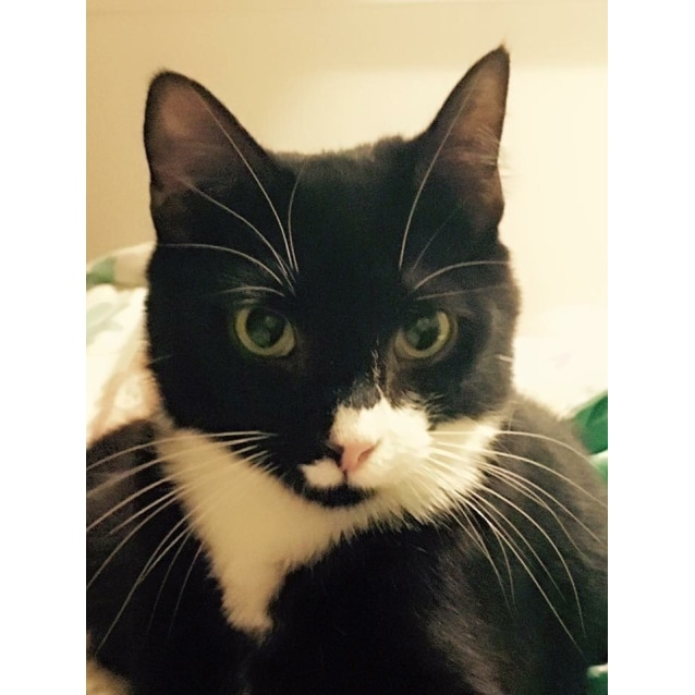 Photo of Pascal (Located In Templestowe)