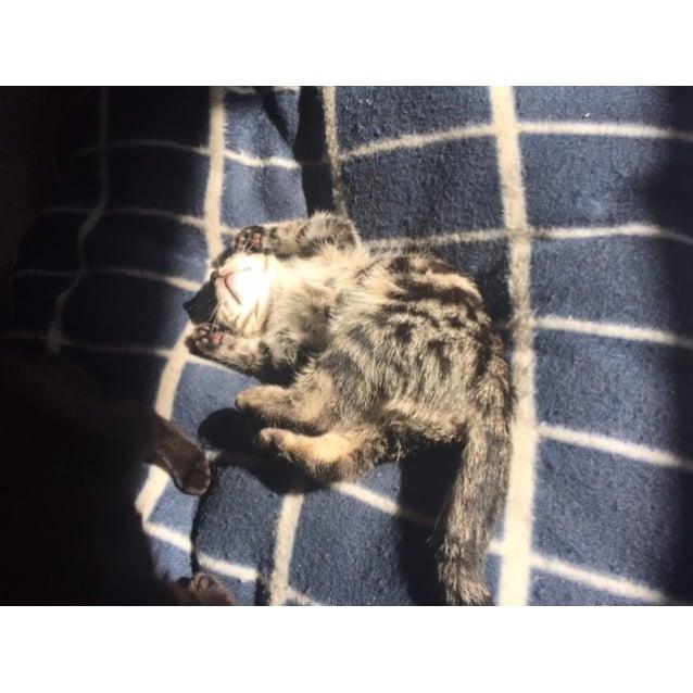 Photo of Cid *Biggest Snuggler Ever*