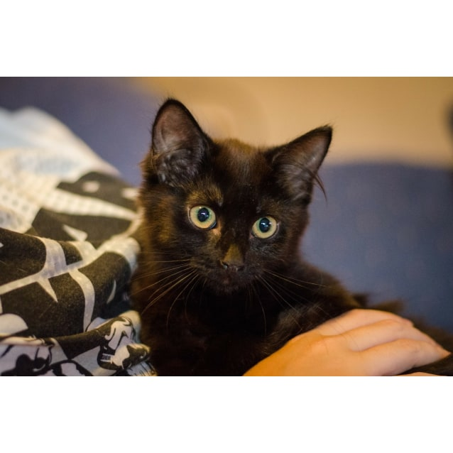 Photo of Rey (Cat/Dog/Child Friendly)