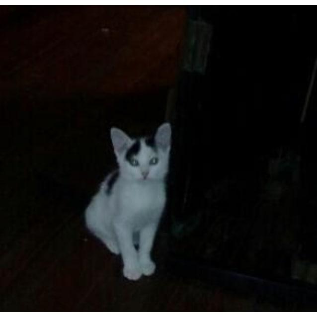 Photo of Sirius