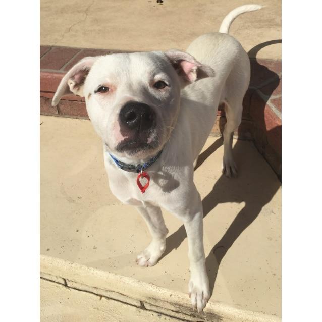 Photo of Winnie (Dog Friendly)