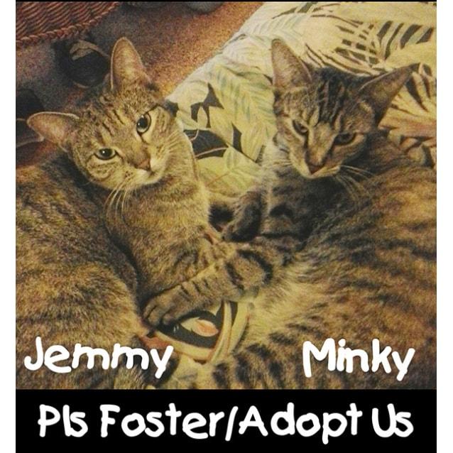 Photo of Jemmy & Minky