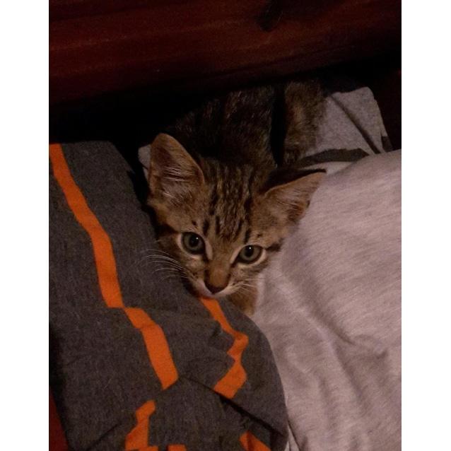 Photo of Sid (Nc492)