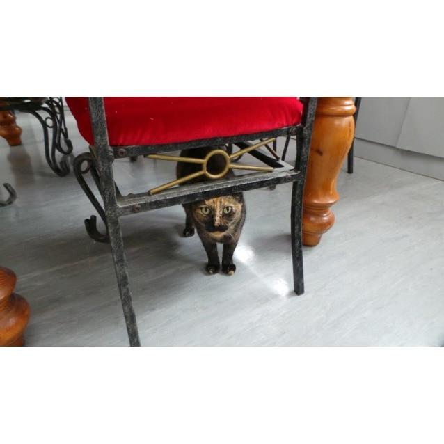 Photo of Winnie (Avialable Soon)