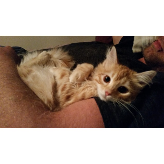 Photo of Gizmo (Located In Bundoora) **$150 Adoption**