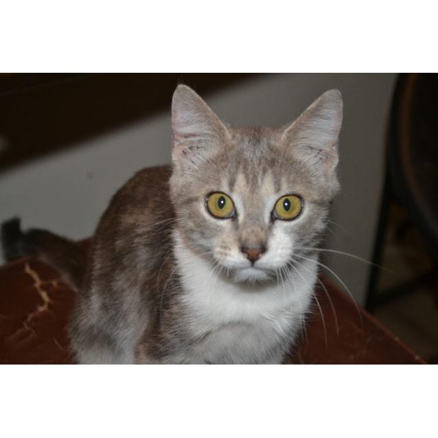 Photo of Iris