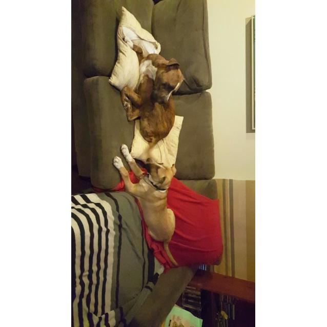 Photo of Nina ~ Dog Friendly