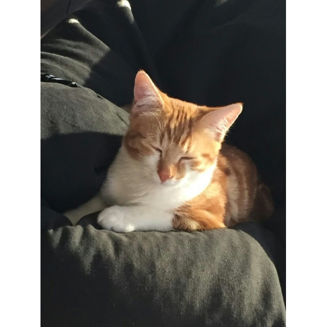 Photo of Benjamin  The Handsome Playful Delight