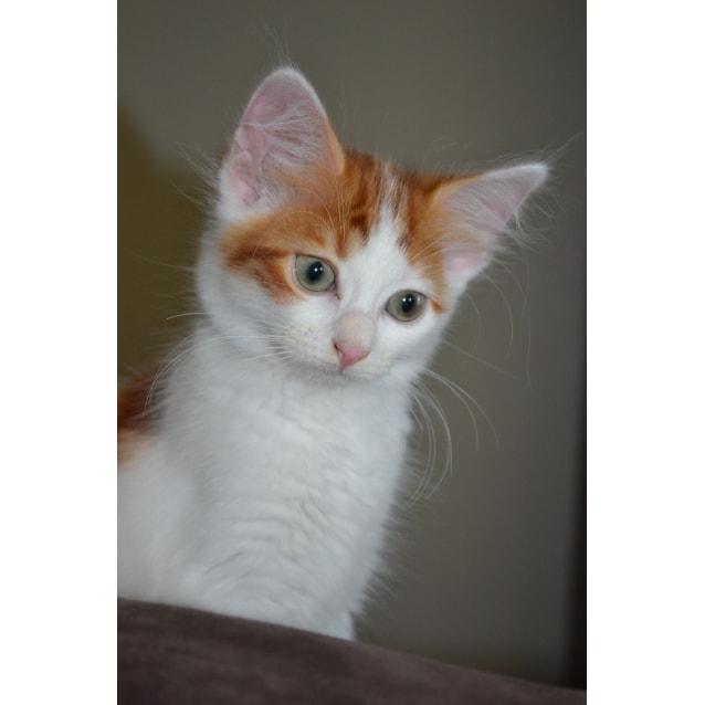 Photo of Tangerine